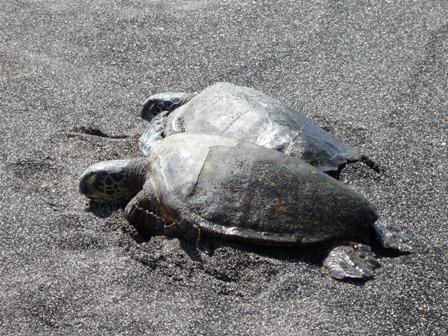 turtles0924.jpg